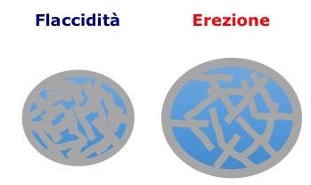 modif-vascol-erezione